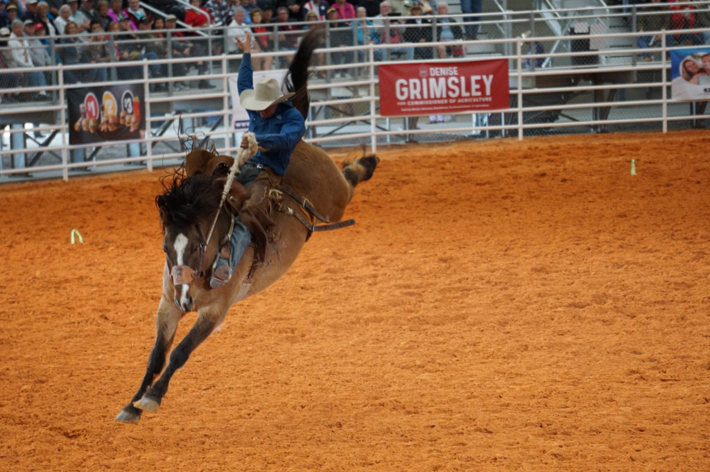 Wild Rides at the Arcadia Rodeo